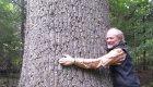 Man hugging pine tree in north idaho