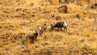 wildlife along the deschutes river